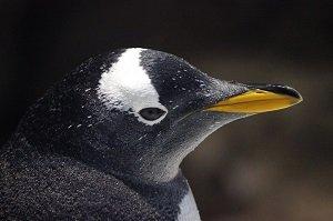 penguin(1).jpg.jpe