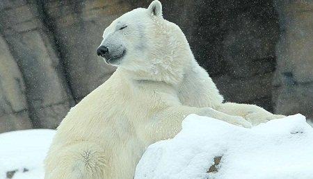 polarbear.jpg.jpe