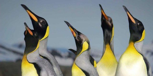 penguin(3).jpg.jpe