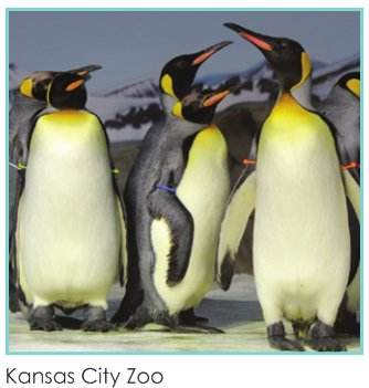 zoo(4).png