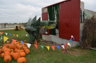 Pumpkin Chomper Dragon at Johnson Farms Pumpkin Patch