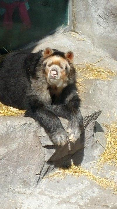 bear2.jpg.jpe