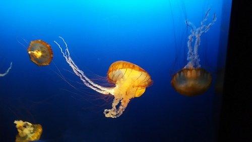 jellyfish.jpg.jpe