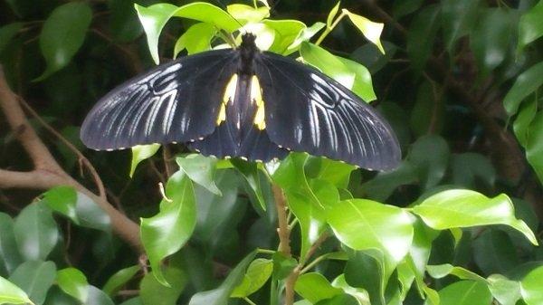 butterfly1(1).jpg.jpe