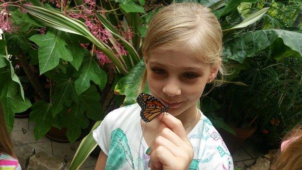 butterfly4(1).jpg.jpe