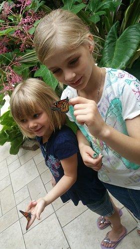 butterfly5.jpg.jpe