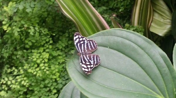butterfly6.jpg.jpe