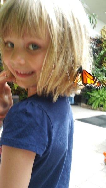 butterfly8.jpg.jpe
