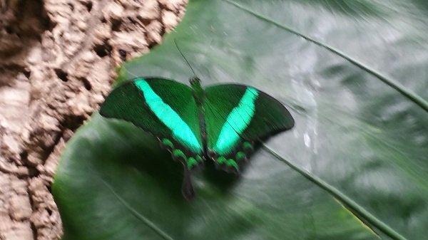 butterfly9.jpg.jpe