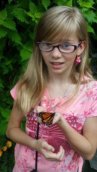 butterfly11.jpg.jpe