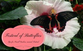 FestivalofButterflies.jpg.jpe