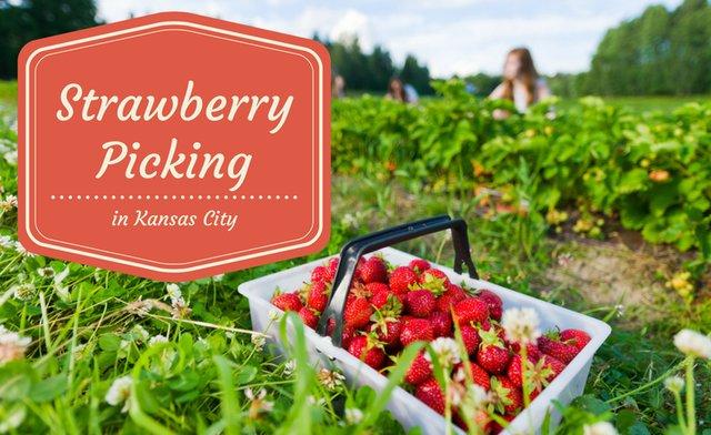 KansasCitysStrawberryPickingGuide.png