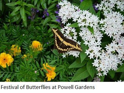butterflyfest.png