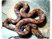 snakesalive.jpg.jpe