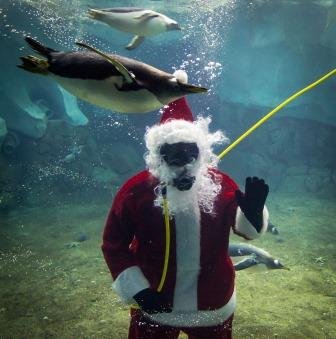 Santa diving with penguins.jpg.jpe