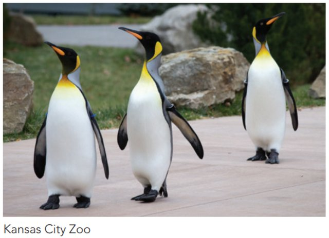 kczoopenguins.png