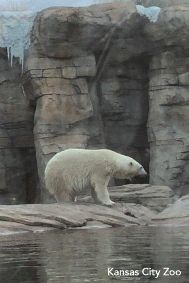 zoo(1).jpg.jpe